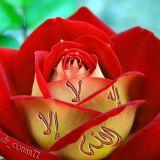 01000658117rohaim@gmail.com